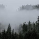 Ideen für die angesagteste Fototapete der Saison, also: Wald im Nebel