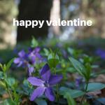 Blumen – Das perfekte Geschenk zum Valentinstag